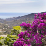 Beautiful Bougainvillea by the mediation area at Villa Andalucia