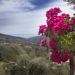 View of flowers by the Orange Room at Villa Andalucia